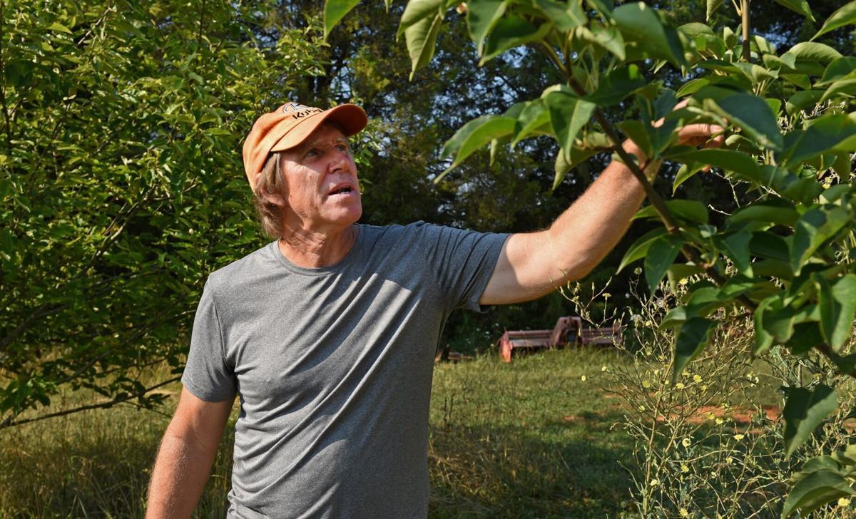 Y River Farm Kent Layher