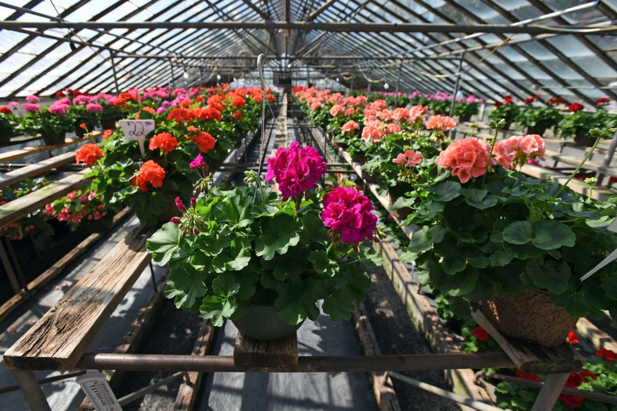 Nurseries Garden Centers Respond To Covid 19 Pandemic Lifestyles Journalnow Com