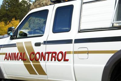 Animal control vehicle