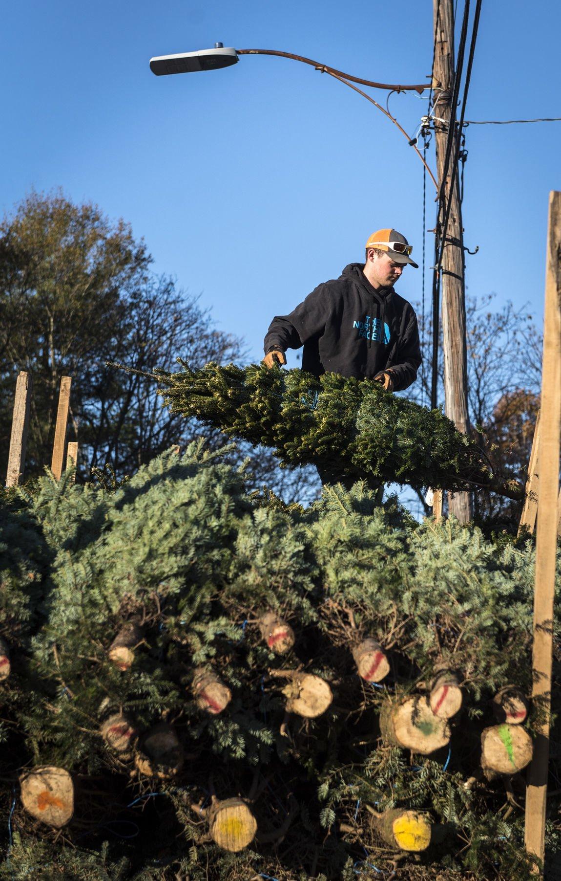 s Christmas preparations at the Mockwood Christmas Tree Lot