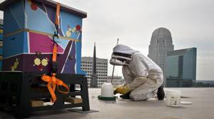 Bee conservation initiative starts in downtown Winston-Salem