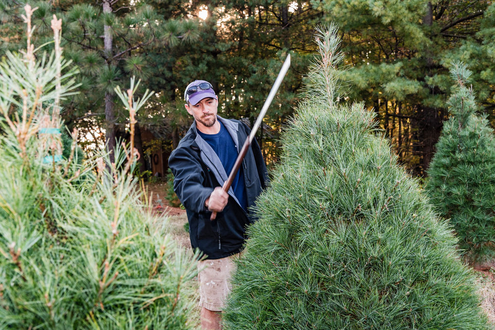 U Cut Christmas Trees.Cutting It Close Winston Salem Monthly Journalnow Com