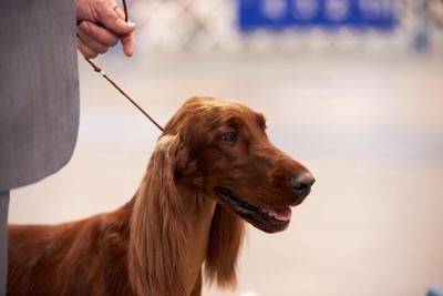 Carolina Cluster Dog Show