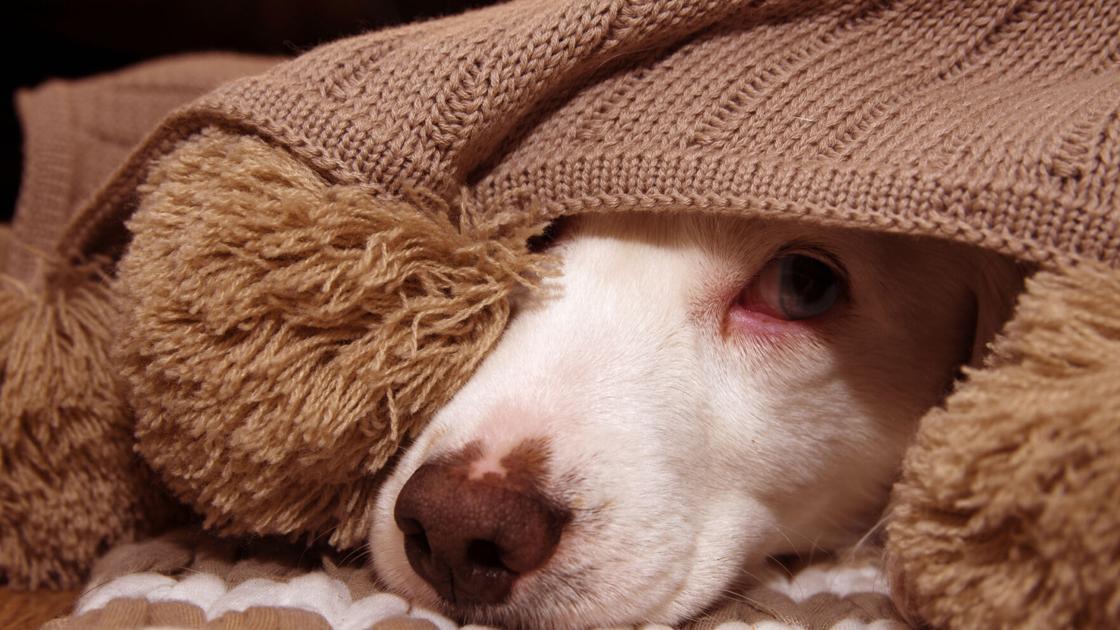 Dr. Fox: Rescued dog has sleep problems