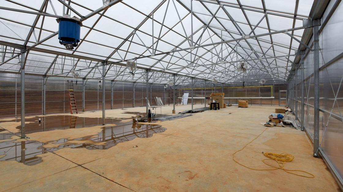 Kimberley Park greenhouse (copy)
