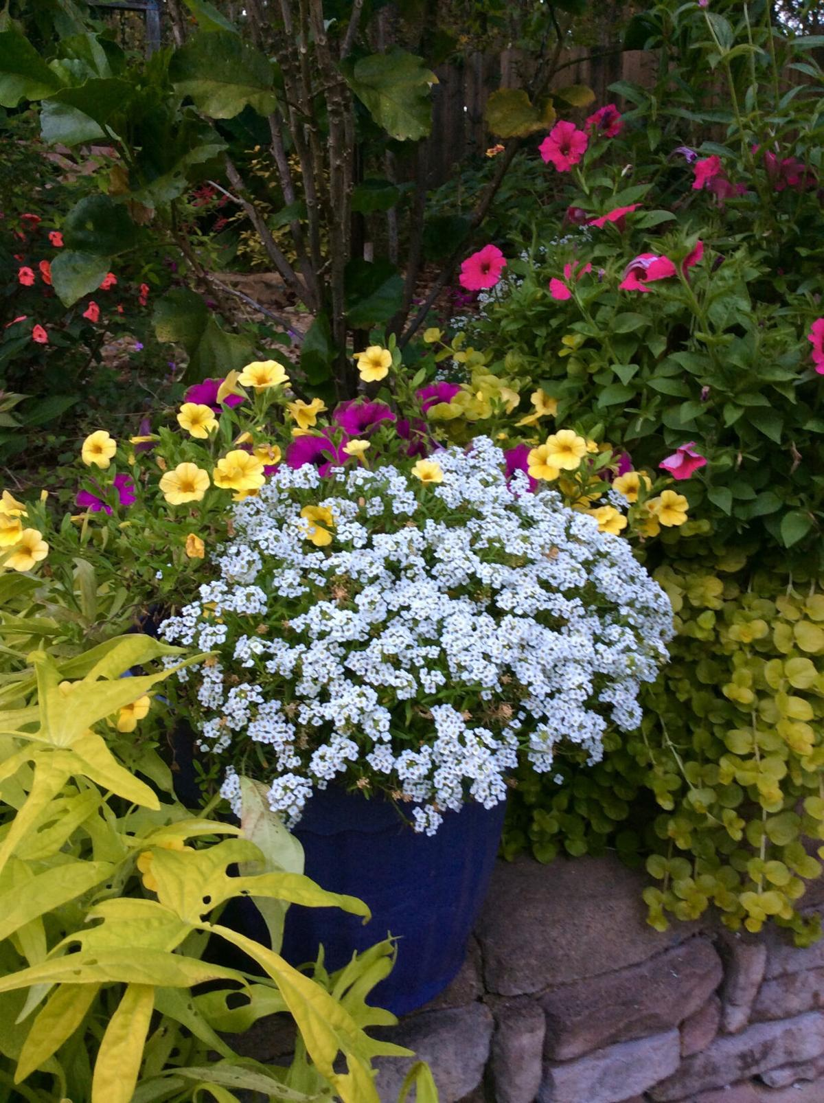 LIFE-HOME-ONGARDENING-1-MCT