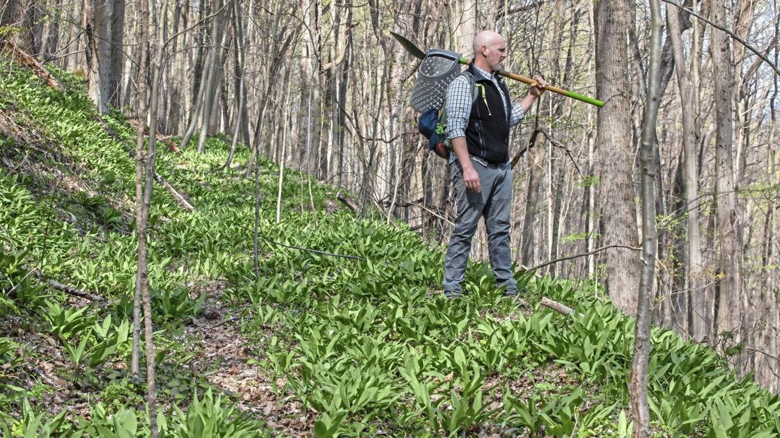 If you can find them, garlicky ramps are a fleeting taste of spring