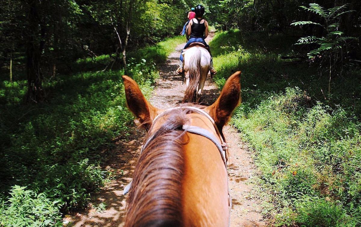 Autumn Escape Pilot Mountain By Horseback Winston Salem