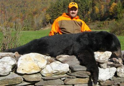 Wilkes black bear
