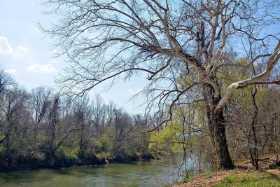 Ronda hanging tree