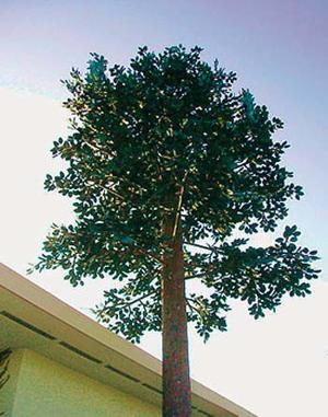 <p>Revised Wilkesboro ordinance calls for greater efforts to conceal wireless telecommunications equipment. This could include camouflaging towers so that they look like trees.</p>