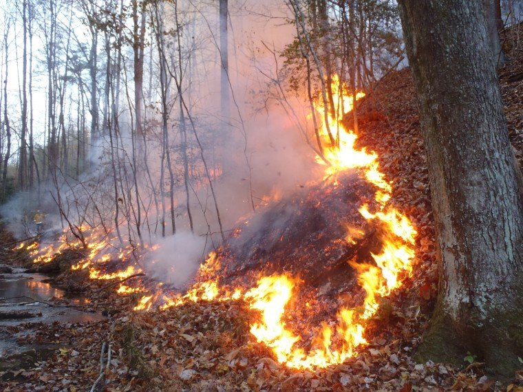 Forest fire Monday