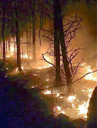 Woods fire scene