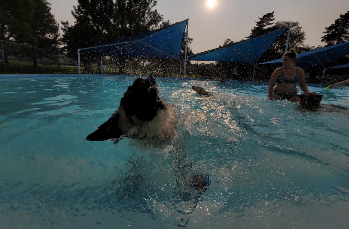 Pool Plunge