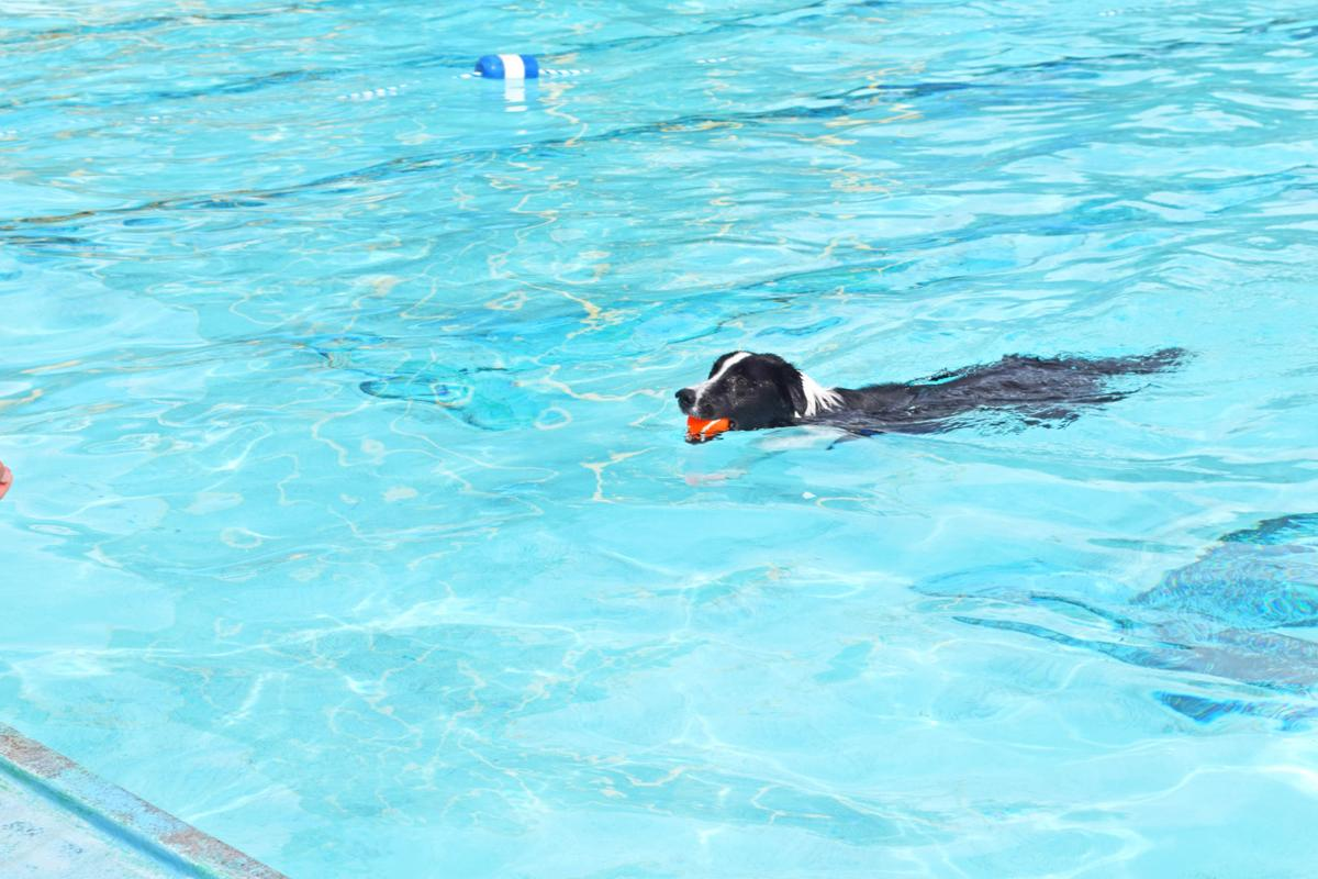Puppy Plunge at the Municipal Swimming Pool
