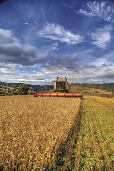 063020-du-wheat