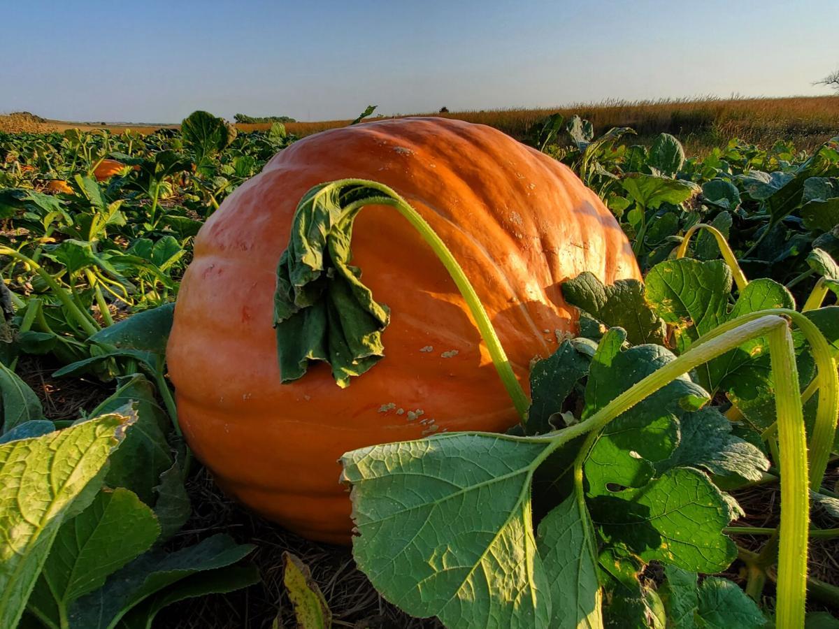 092920-du-pumpkin2