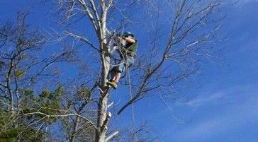 Ford Tree Trimming