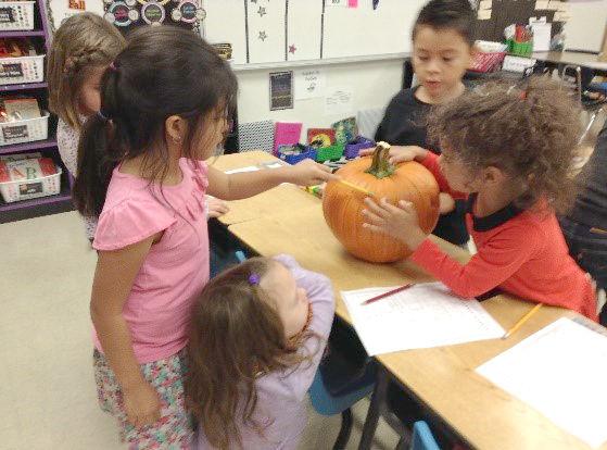 Pumpkin professors