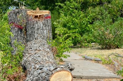 Shade-Tree Cutting