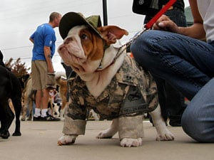 Dogs socialize at Halloween-themed festival