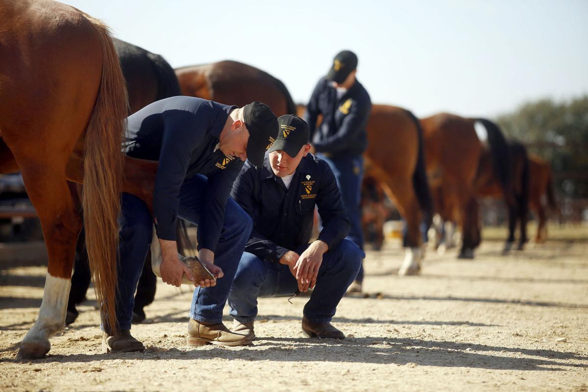 First Team horses