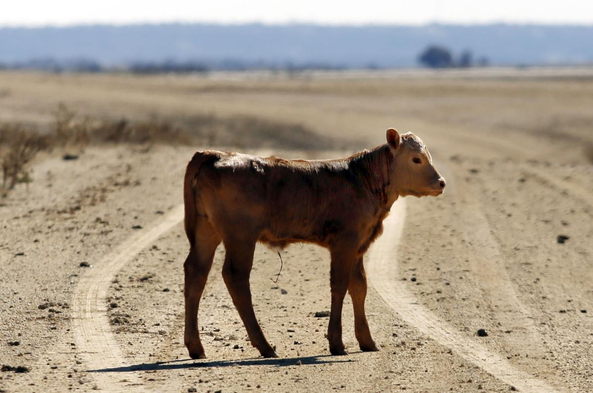 Cattle Lawsuit