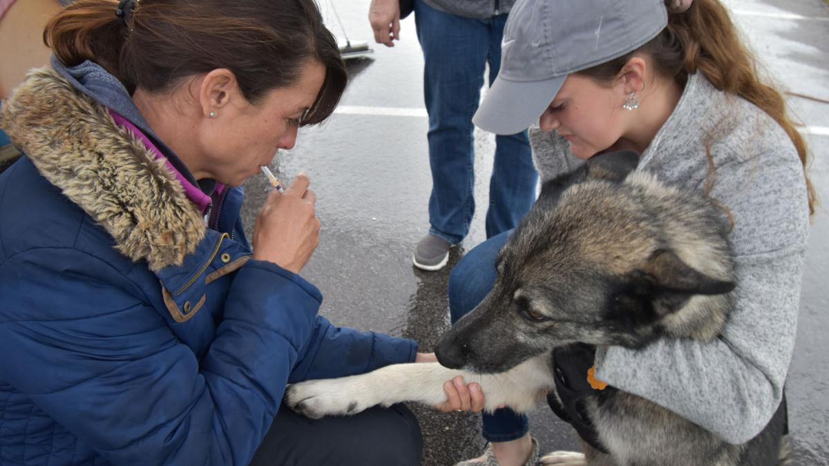 Mobile veterinary clinic pays visit to Heights