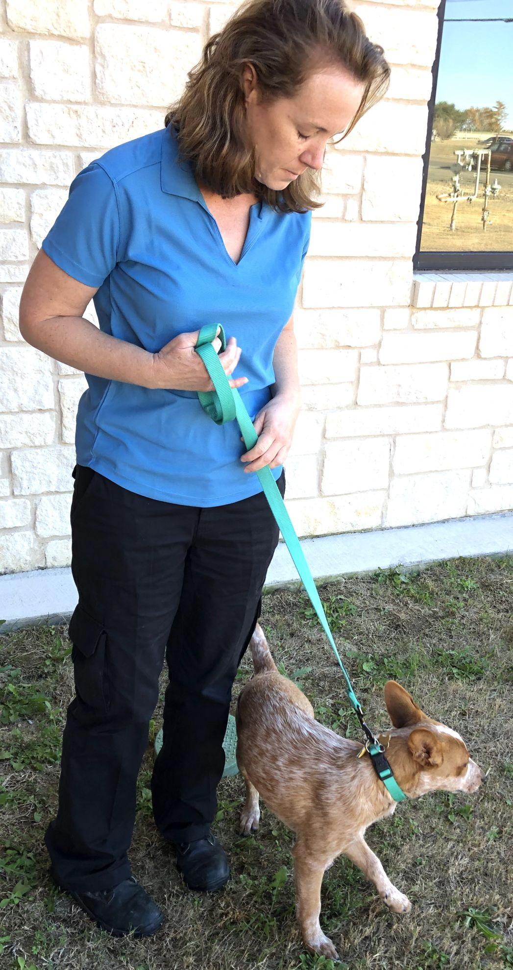 Pet Adoption Center director 2.jpg