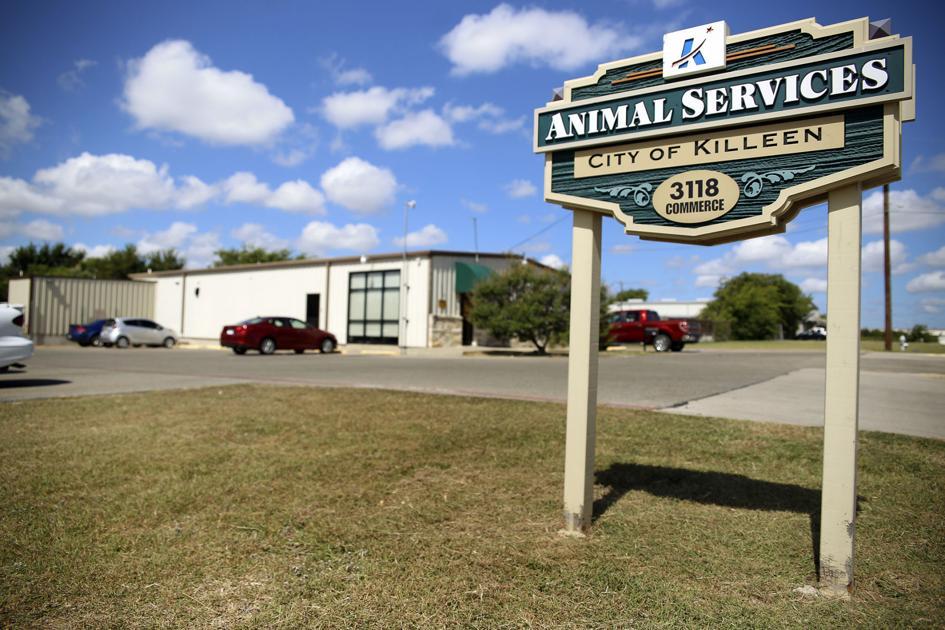 Killeen Animal Shelter Needs Immediate Help Kdhnews Com