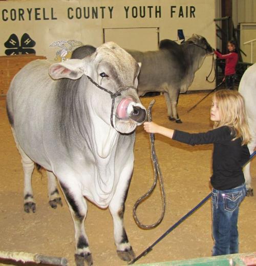Cattle Drive 4-H Club