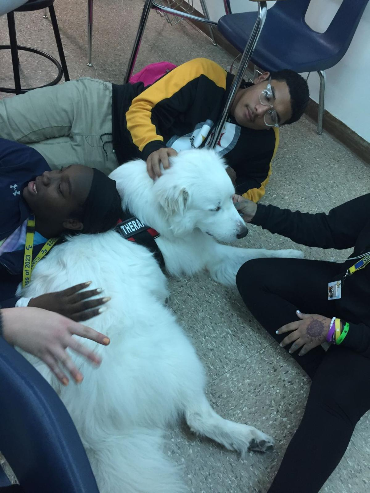 CCISD THERAPY DOG 1
