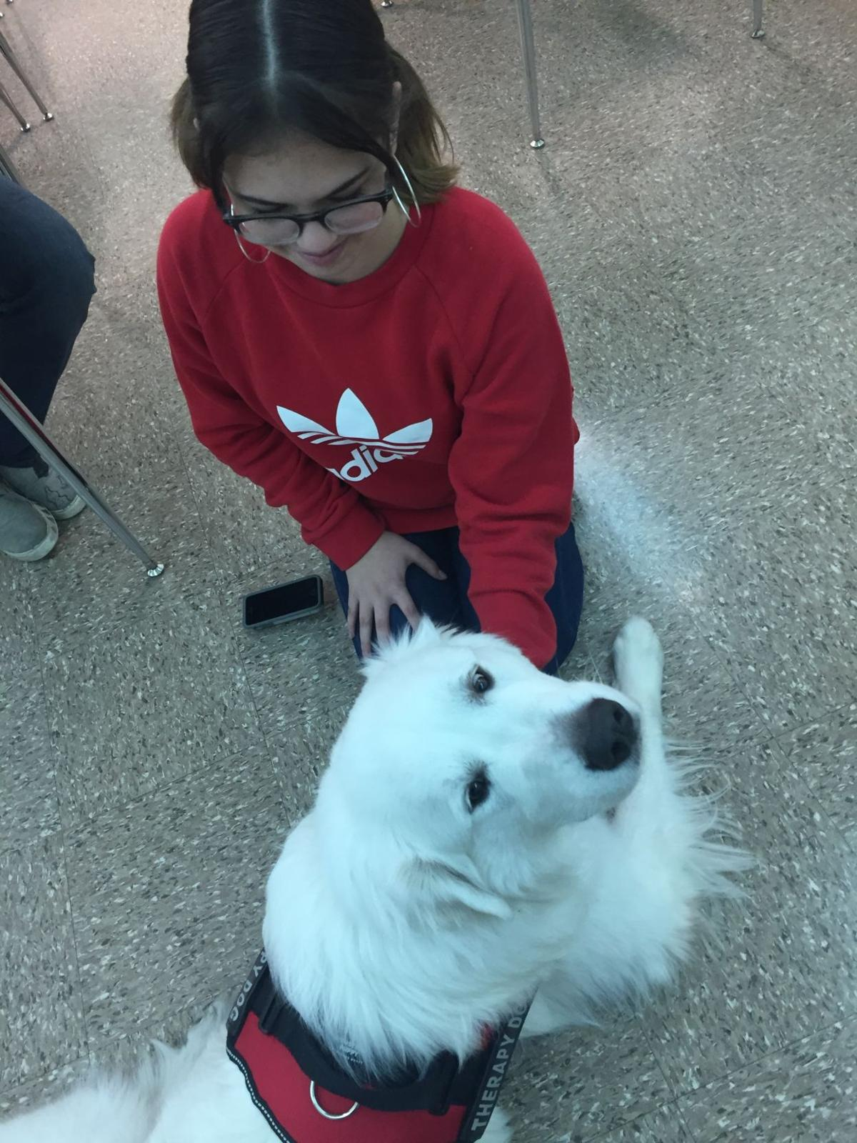 CCISD THERAPY DOG 2