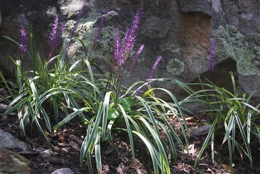 Gardening-Choosing Groundcovers