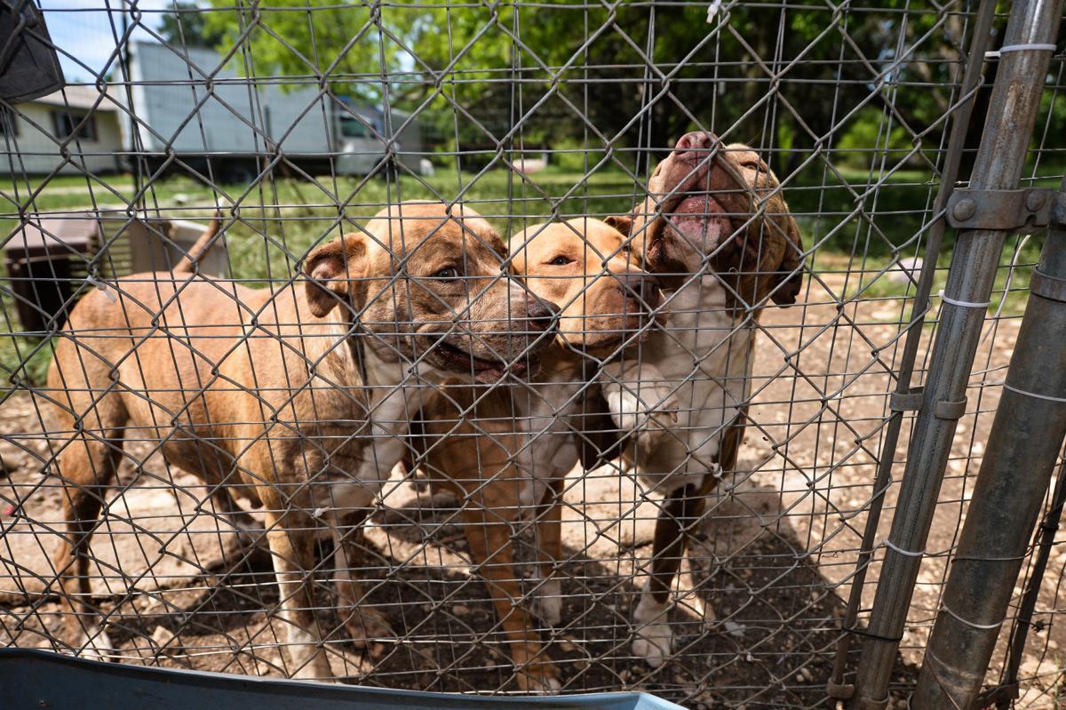 Dogs of Kempner