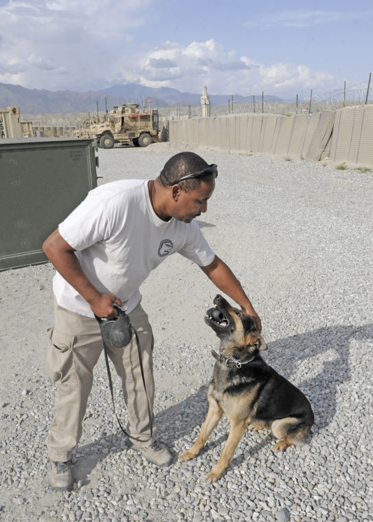 Canines, handlers keep FOB Gamberi safe