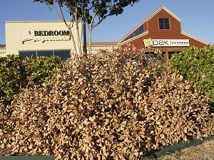 Heights mulls change to landscaping rules