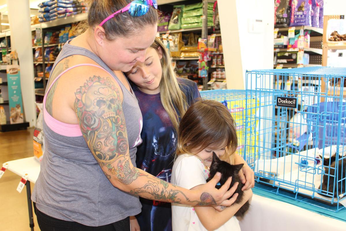 Kitten adoption event