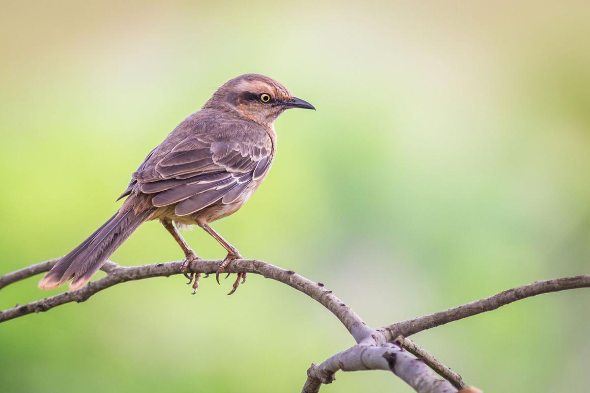 LIFE HOME-GARDEN-SONGBIRDS OC