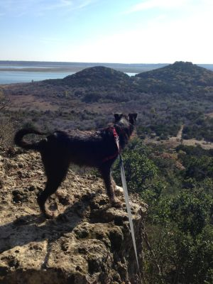 Rusko at Dana Peak Park Hiking Trails