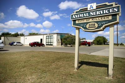 Killeen animal shelter