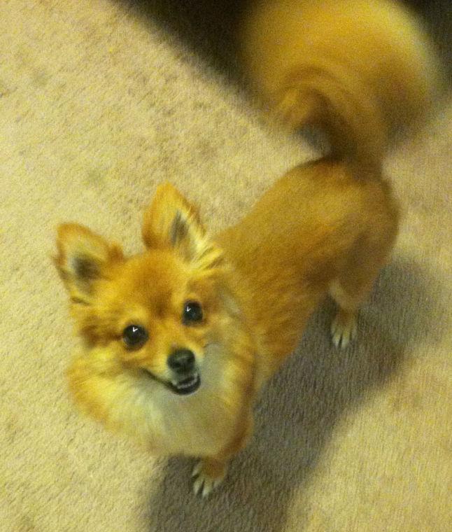 Missing dog found
