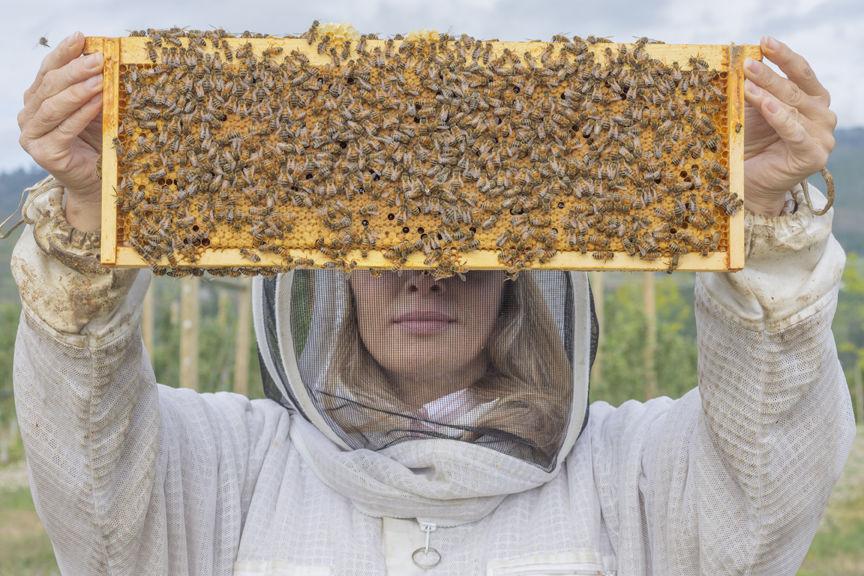 4A-6-2020-WEB-Beekeeper-Hiveology.jpg