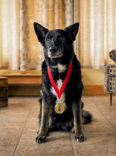 Dog who saved owner from bear among 3 rescues inducted into hall of fame