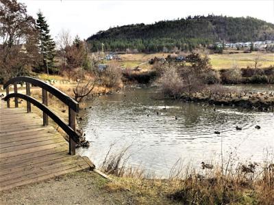 Valley Glen Wetland