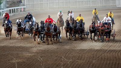 Group wants charges in horse deaths during Calgary Stampede chuckwagon races