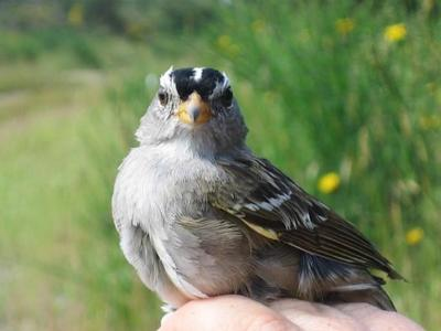 'Strong and consistent effect:' Research links common insecticide to bird harm
