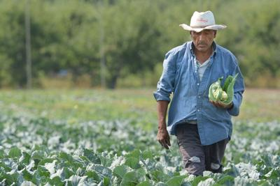 Labour shortage filled by Mexicans