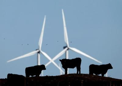 Wind power developers upbeat about Alberta despite end of power project auctions