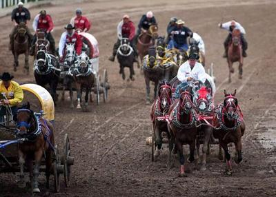 Horse euthanized after injury in Calgary Stampede chuckwagon race
